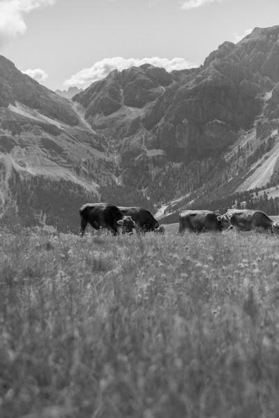 haseimglueck.de Rezept, Schüttelbrot Südtirol 10