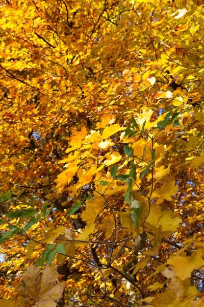 Herbst Impressionen I Autumn Impressions I haseimglueck.de